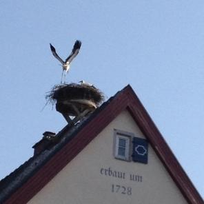 Hirsch mit Storch
