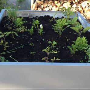 Hochbeet- erste Pflanzen