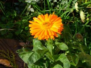 an orange blossom