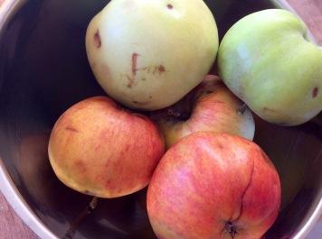 Apfelblechkuchen-2